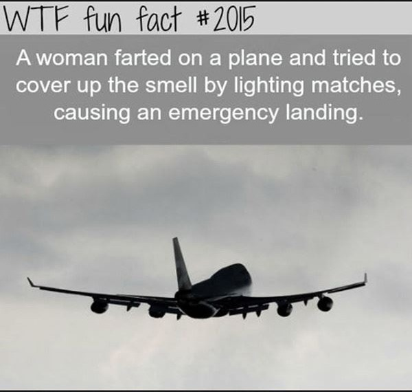 Wtf fun facts 12 photos
